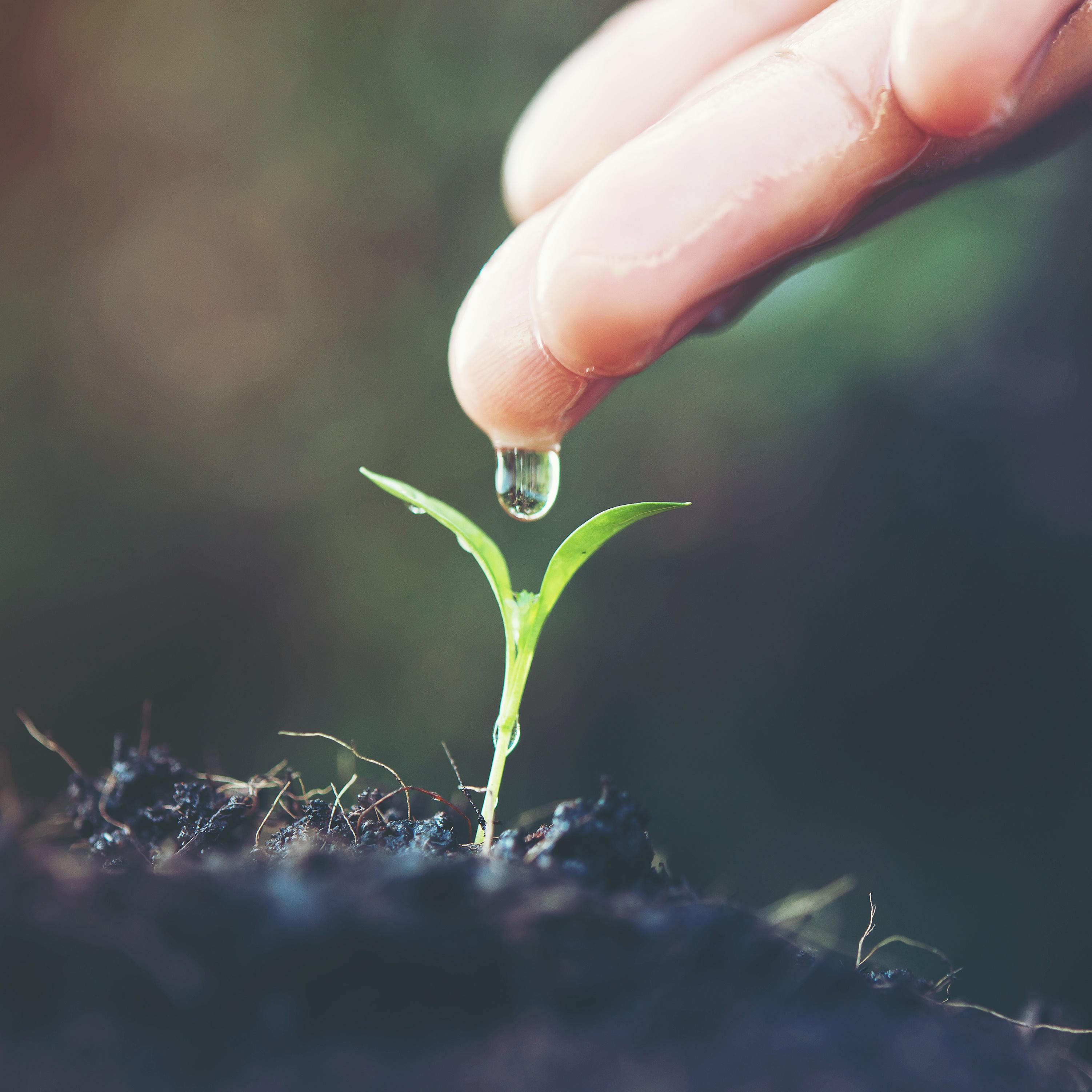 Kırsal Kalkınma Destekleri 13. Etap Kapsamında Tarıma Dayalı Yatırımların Desteklenmesi Programı Yayımlandı